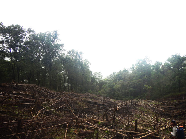 Deforested area in Honduras
