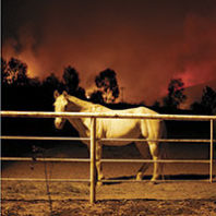 Fire threatens horses in pen during California fires. Photo Eric Thayer