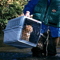 Cat in pet carrier begin carried away from a flood