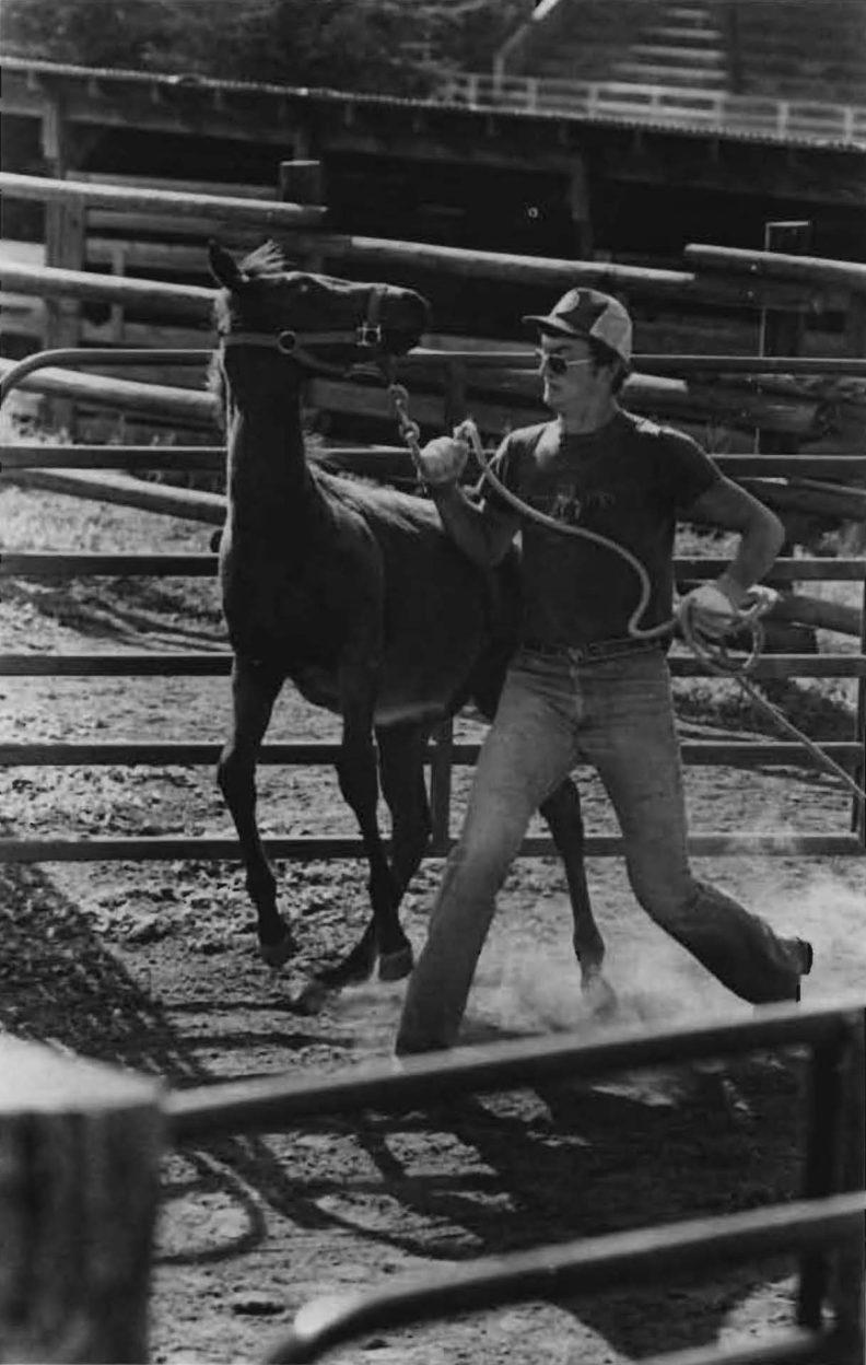 Livestock show at Hilltop Stables, WSU, 1983