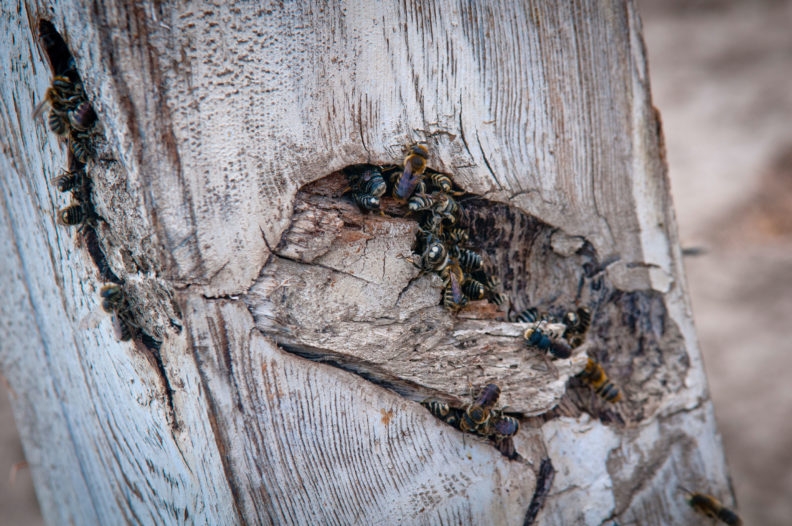 Honey bees congregated on piece of wood