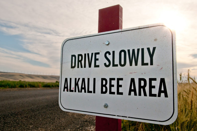 Speed limit sign for alkali bees