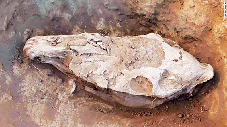 Ancient horse skull in Mongolia