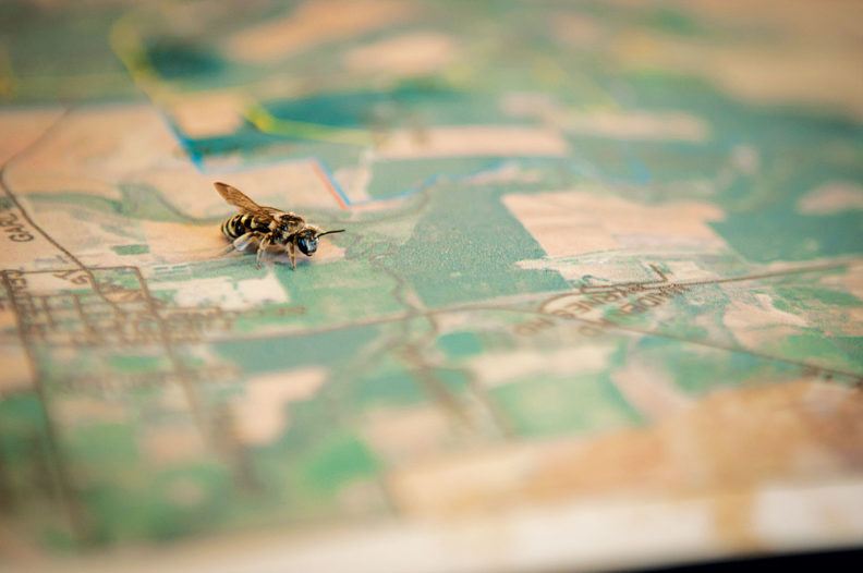 Alkali bee on a map