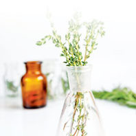 fresh thyme in bottle on white background - Photo Vadim Ginzburg