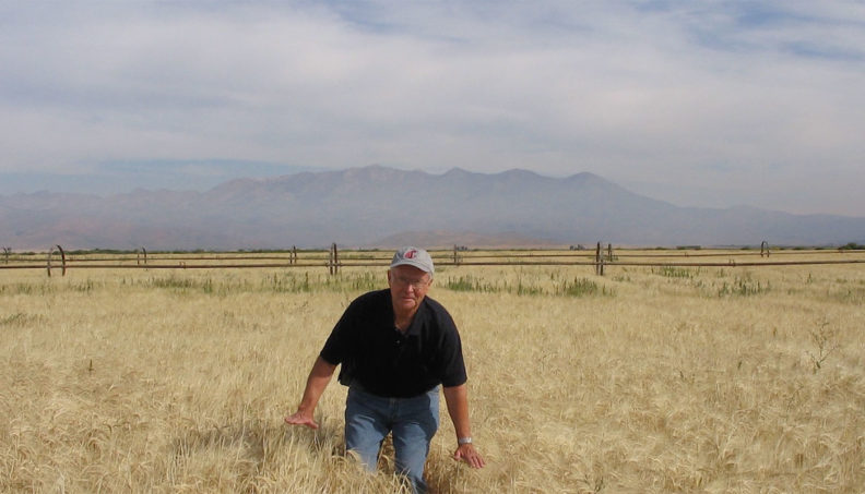 Jim Cook in a wheat field