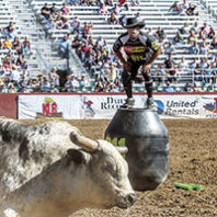 JJ Harrison faces down bull. Photo Bailey Harrison