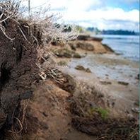 Meyer's Point beach. By Zach Mazur