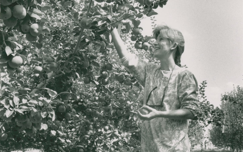 Student picking apples in 1992