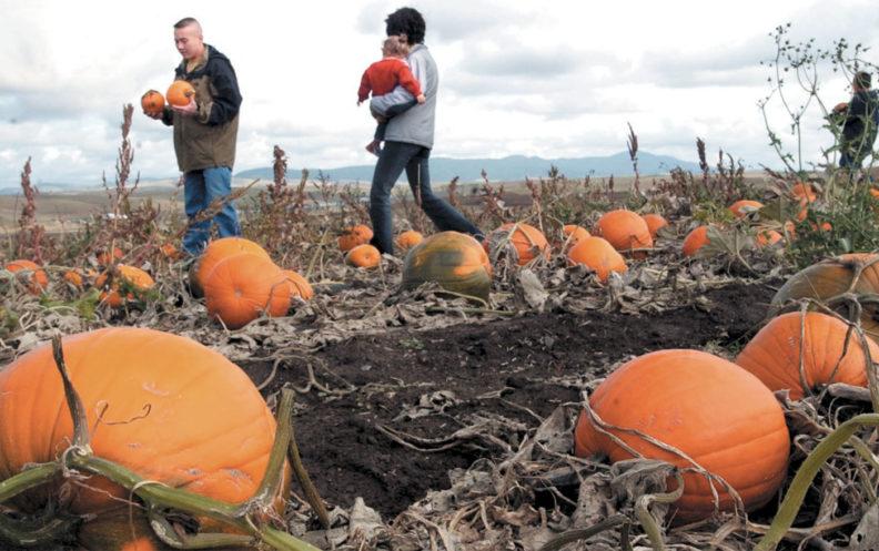 Family picks pumpkins in Tukey pumpkin patch in 2000