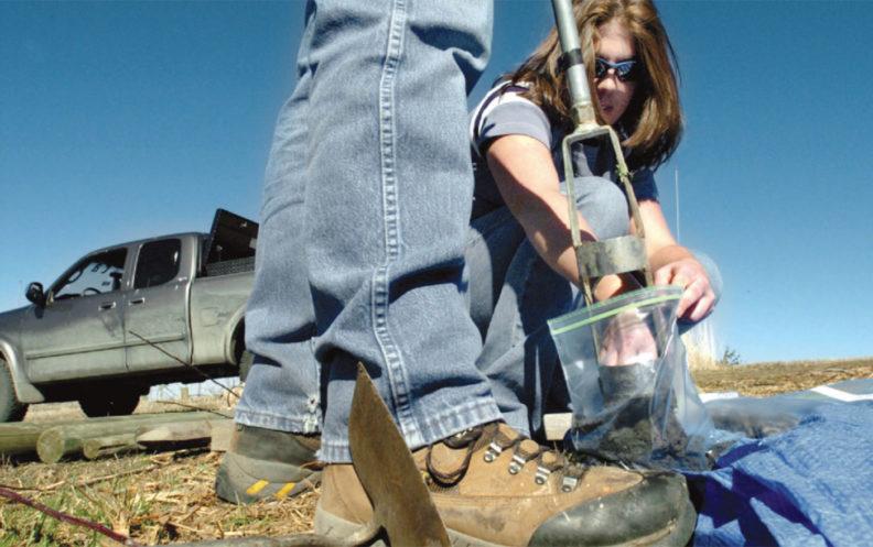 Taking soil samples for preparation of grape planting