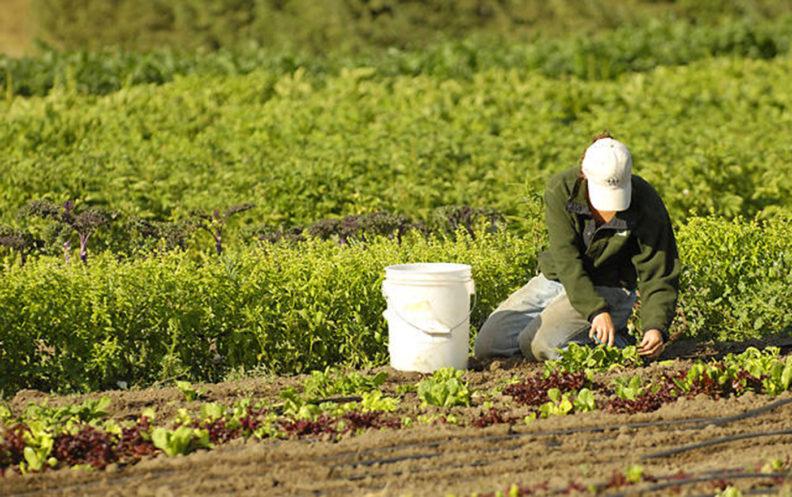 Person planting at Tukey Orchard