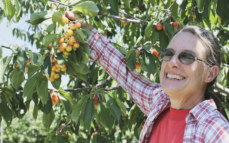 Deb Pehrson, manager of the WSU Tukey Horticulture Orchard