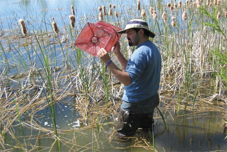 Erim Gómez in wetland with a trap
