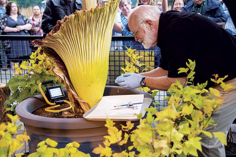 Steve Sylvester extracting seeds from titan arum corpse flower