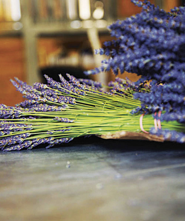 Cut and bundled lavender stalks