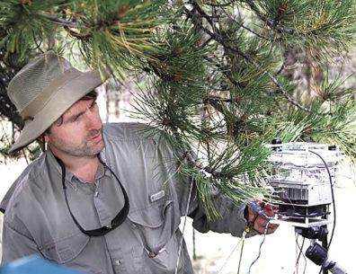 Atmospheric scientist tests pine needles for terpene levels in Colorado
