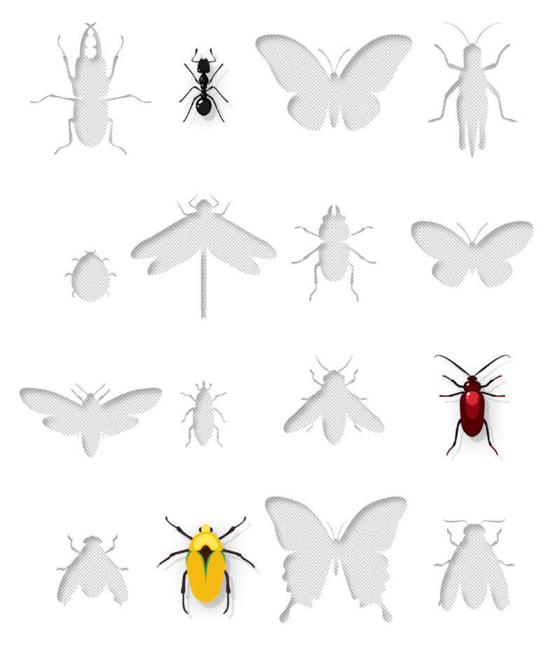Insects in illustration