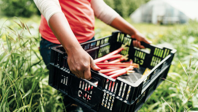 Melony Edwards carries produce from her farm