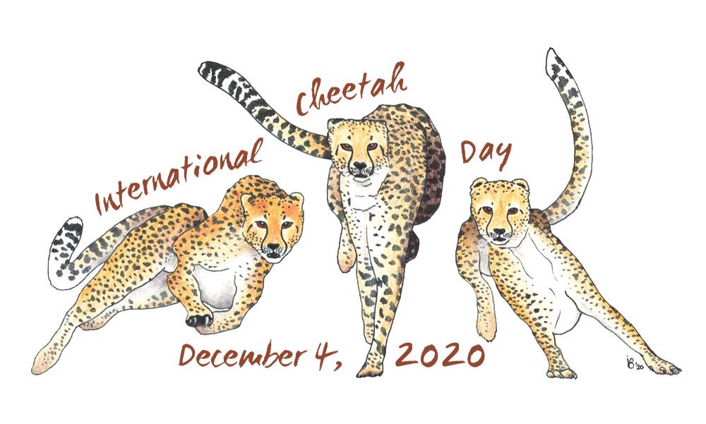 Illustration of three cheetahs for International Cheetah Day, December 4, 2020