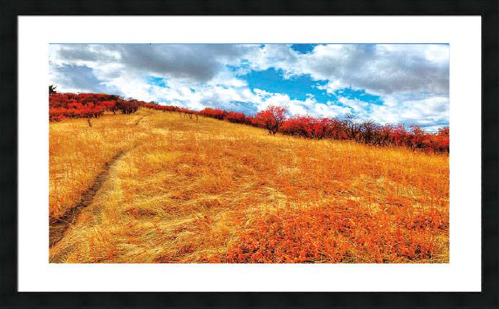 Image of yellow grass field with red trees