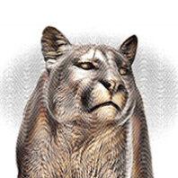 Cougar statue illustration at WSU