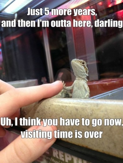 Funny-Lizard-In-Jail-MEME-Jokes-2014