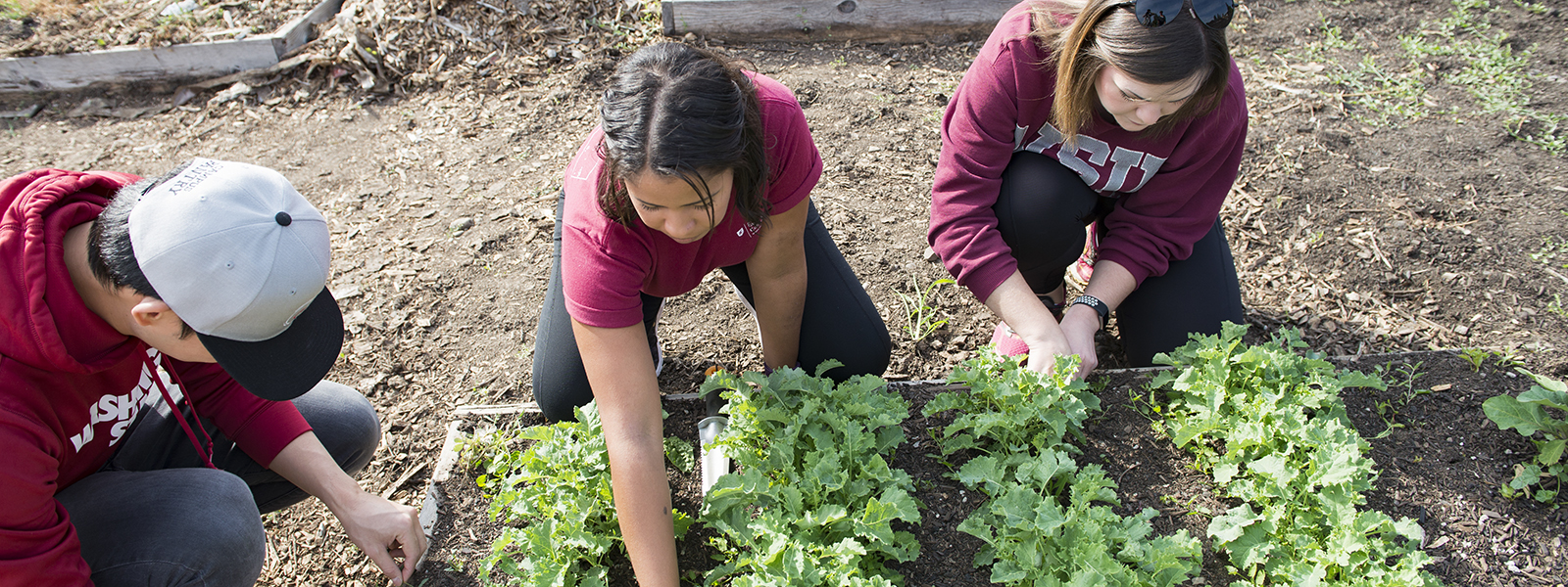 How To Make A Raised Vegetable Garden