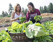 Students from the Nutrition and Exercise Physiology program pick lettuce in the program's community garden