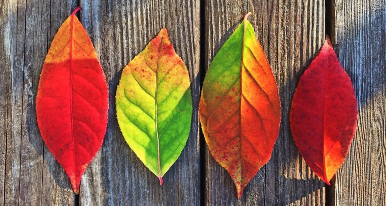 four multi-colored leaves in a row