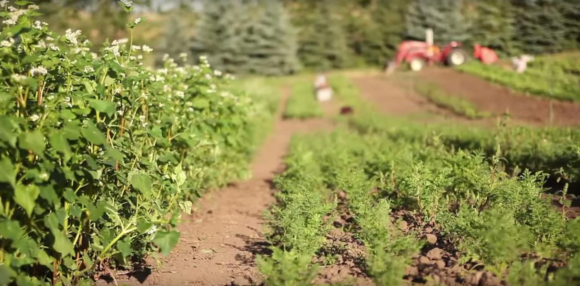 wsu-organic-farm