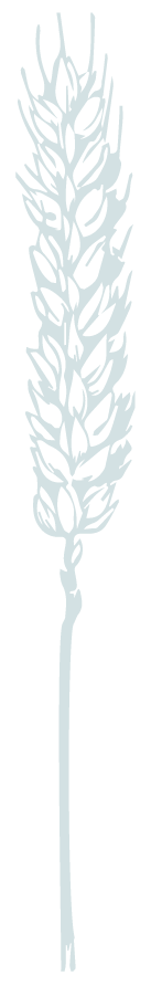 Illustration of a stalk of wheat